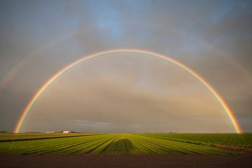 Regenbogen über den Poldern von Wadden Texel von Margo Schoote
