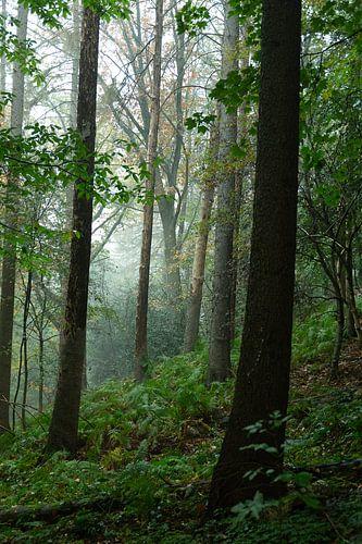 Bomen in de regen