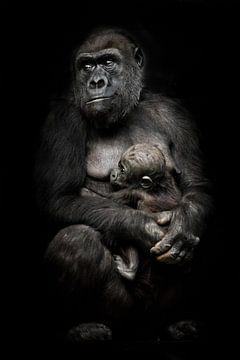 Gorilla aap moeder (of haar zus) verpleegt haar kleine baby, schattig tafereel. geïsoleerde zwarte a van Michael Semenov