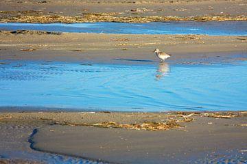 Rotschenkel watet den Strand von Jan Brons