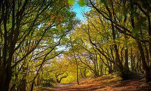 Herbst-Panorama von Dennis Carette