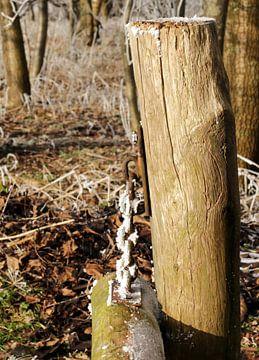Een paaltje in het bos