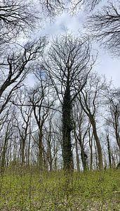 Bäume im Wald von Weight4life