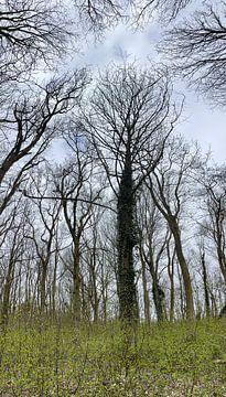 Bomen in bos van Weight4life
