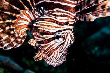 Lionfish van Roel Jungslager