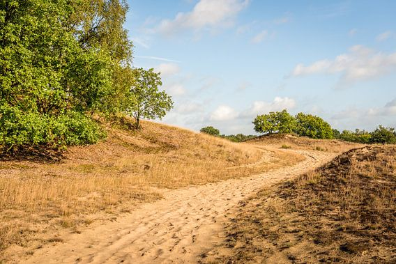 Zandpad in natuurgebied van Ruud Morijn