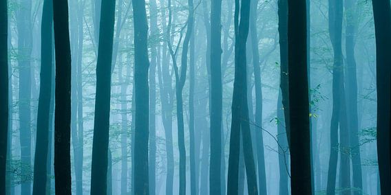 Morning twilight blues van Nando Harmsen