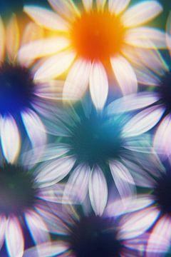 Sonnenhutblüten, fotografiert von einem Prisma.