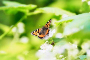 Schmetterling von Wendy Tellier - Vastenhouw