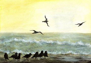 Möwen vor dem Sonnenuntergang von Sandra Steinke