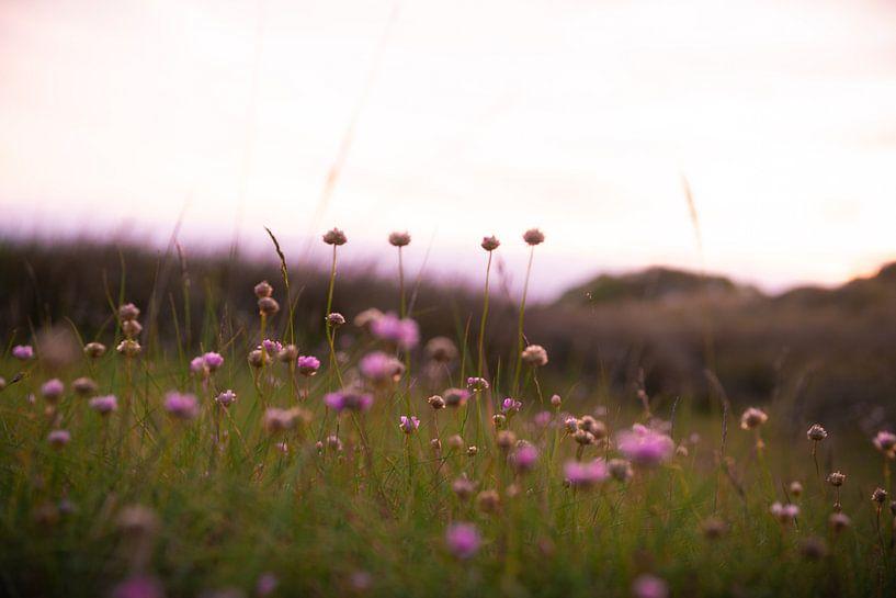 Paarse bloemen van Arthur de Rijke