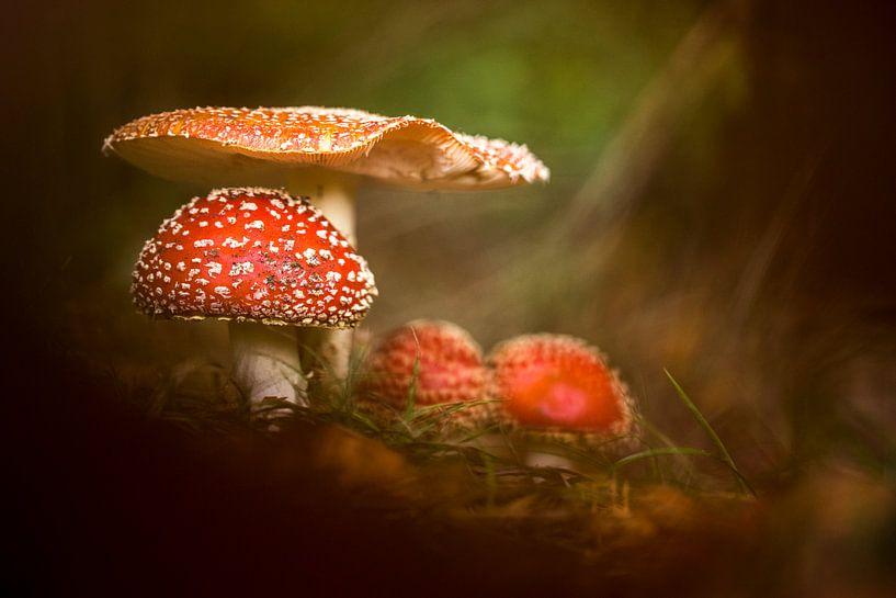 Fairytale van Christl Deckx