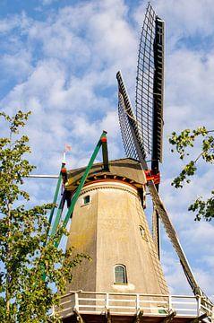 één traditionele Nederlandse windmolen van Laimute Kuriene