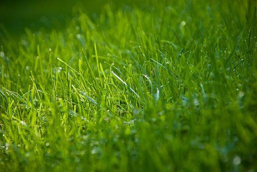 Gras von Michael Roubos