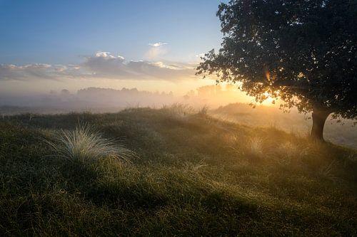 Sonnenaufgang in den Dünen von