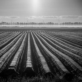 Le pays de la pomme de terre sur Martijn Tilroe