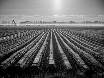 Aardappel land