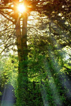 Lever du soleil sur BVpix