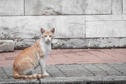 Portret van een zwerfkatje in Italië. van
