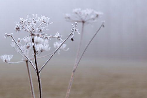 Dew Flower sur