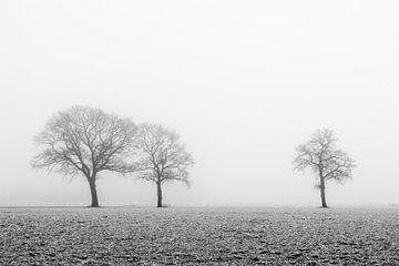 Bomen in de mist van Danny den Breejen