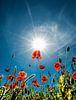 Poppies van Harrie Muis thumbnail