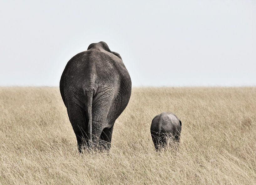 Elefant mit kleinem von Esther van der Linden