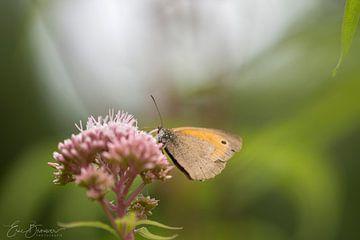 vlinder op bloem van eric brouwer