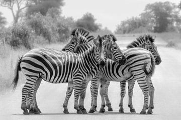 Schwarz-weiße Zebras von Marijke Arends-Meiring