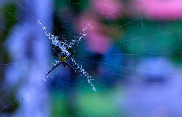 Spin in het nationaal park Cahuita van Maarten Verhees