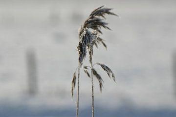 Einsam im Winter von EnWout