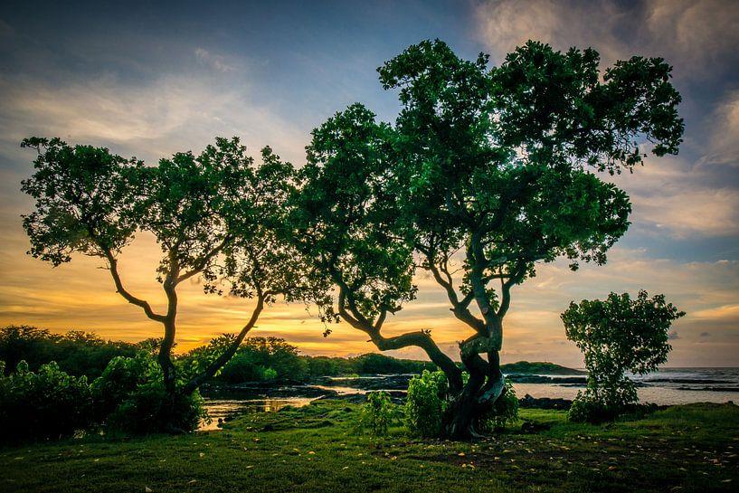 Zonsopgang in Hawaii van Jim De Sitter
