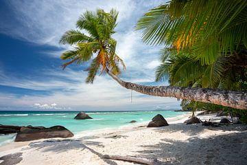 Der perfekte tropische Strand von Krijn van der Giessen