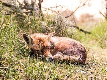 Sleeping beauty van Stephan Petersen