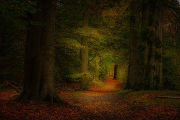 Herfstlaantje in de bossen. van Susan van Etten
