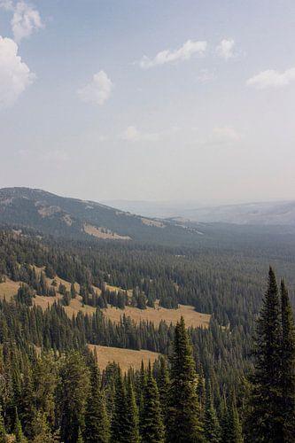 Uitzicht vanaf Mount Washburn; Yellowstone National Park van