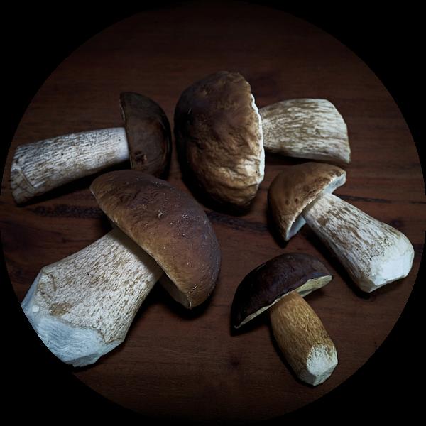 Berkenzwam, kastanjeboleet en eekhoorntjesbrood van Heiko Kueverling