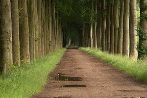 Laan met bomen van Nella van Zalk