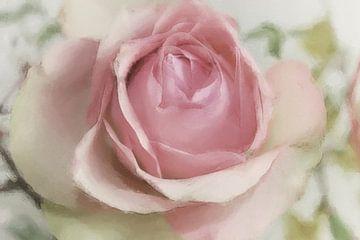 rosarot van Dagmar Marina