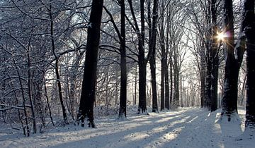 Zonlicht in besneeuwde bomenlaan in de winter von J.A. van den Ende