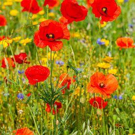 Een veld vol met wilde bloemen van John Kreukniet