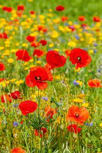 Een veld vol met wilde bloemen van