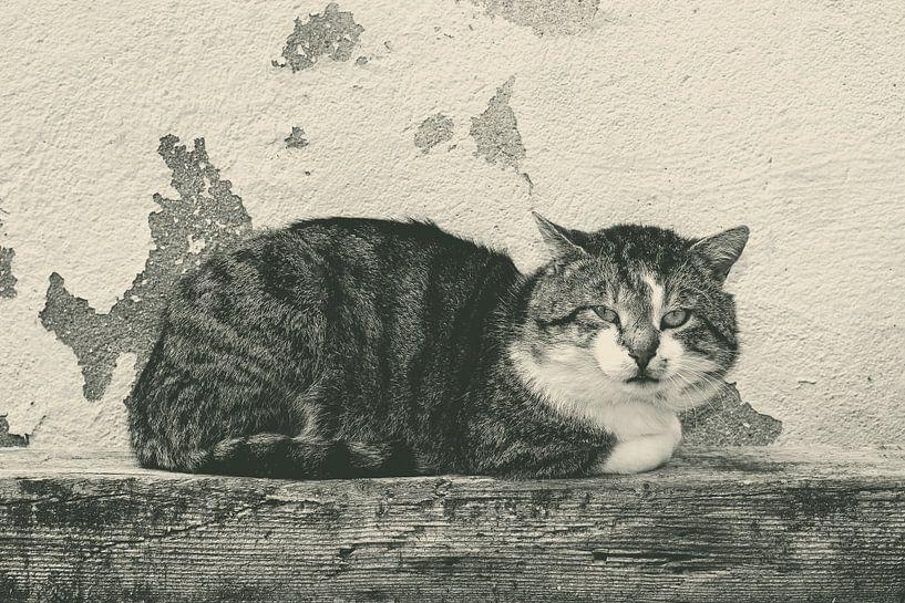 Katzenblick von Claudia Evans