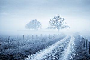 Oude Eik in de mist van Chris Clinckx
