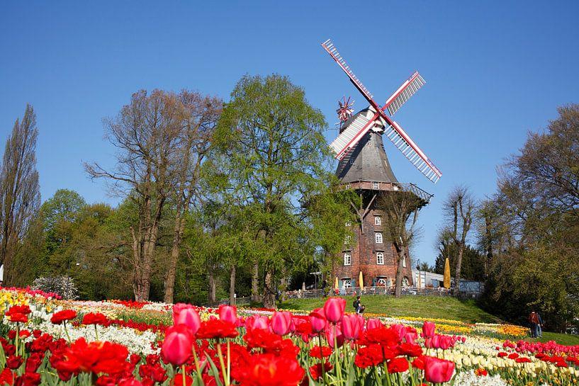Moulin, moulin à vent, moulin, fleurs, Brême, Allemagne, Europe sur Torsten Krüger