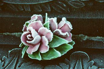 Winterrose von Michel Kruiswijk