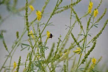 Een Bij in alle rust bij de Bloemen... van DoDiLa Foto's