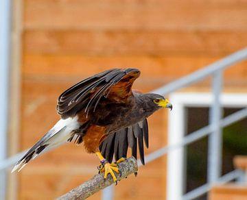 vogel von Rick Van der bijl