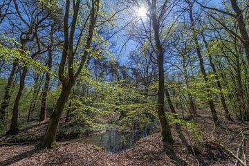 Bos Dottinkrade in de nabijheid van Winterswijk in Nederland van Tonko Oosterink