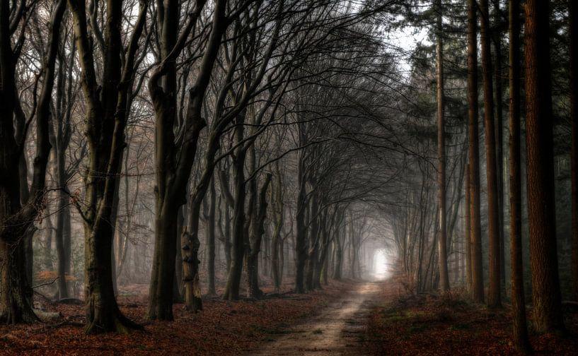 Licht aan het eind van de tunnel van Jan Paul Kraaij